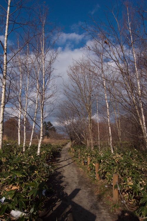森林公園内の散歩道