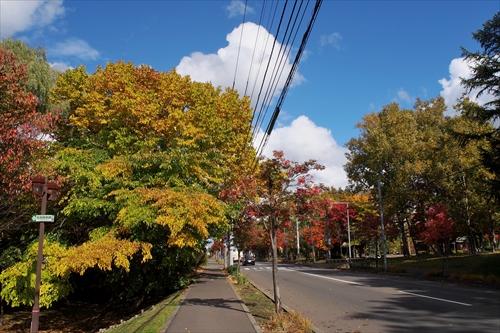 2番通りの紅葉