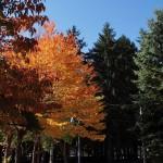 野幌グリーンモールの紅葉