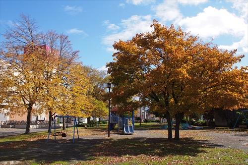 かわなか公園の黄葉