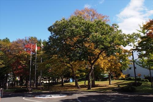 野幌公民館の紅葉