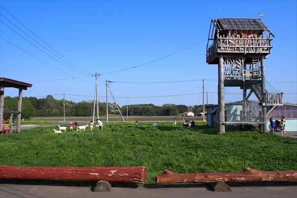 ヤギの草原