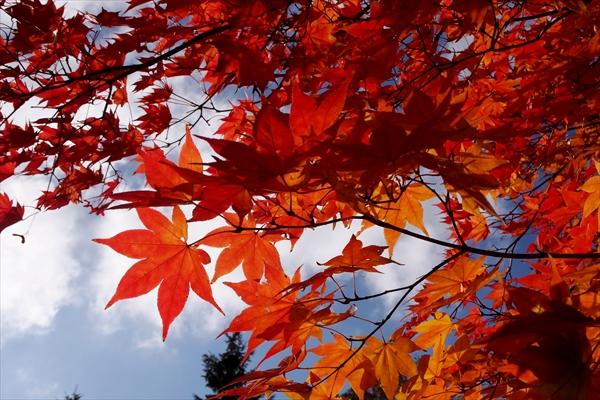 野幌グリーンモール紅葉