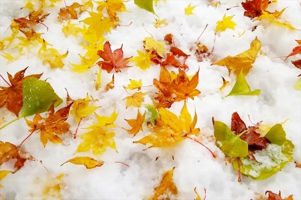 雪景色と落ち葉