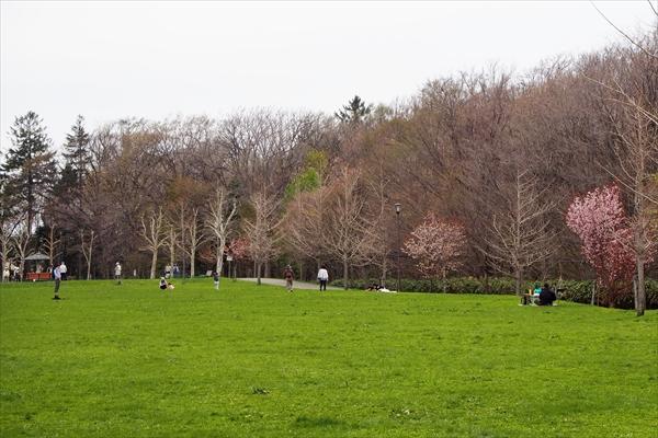 湯川公園エゾヤマザクラと草原