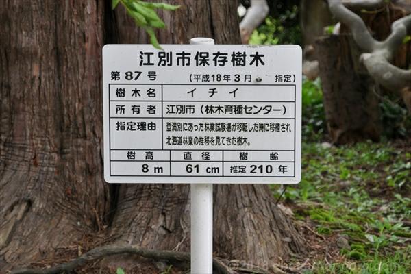 江別市保存樹木・説明板