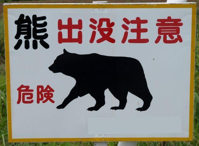熊出没注意(ヒグマ)