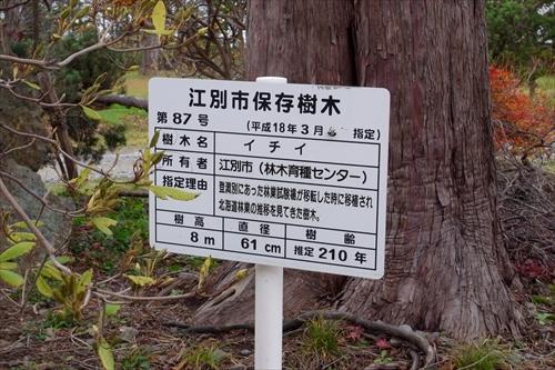 江別市保存樹木説明板