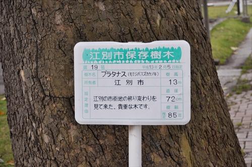 江別市保存樹木