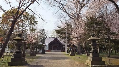 桜満開の錦山天満宮境内