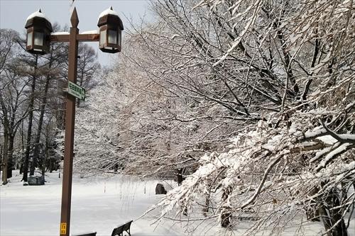 錦山緑地(冬)