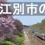 江別市の桜・お花見情報