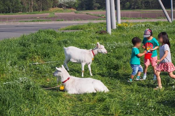 ヤギと子供たち