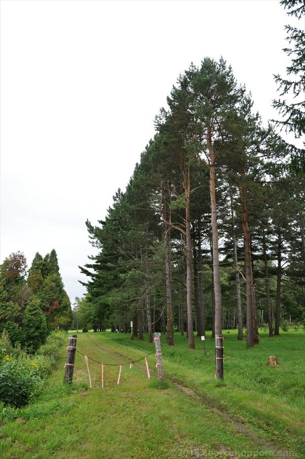 林木育種場