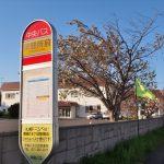 保健所前バス停と御衣黄桜
