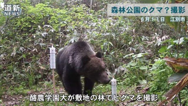 熊(江別市野幌森林公園)2019