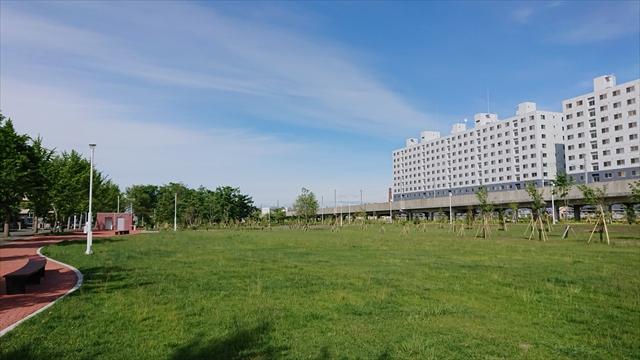 野幌中央緑地・芝生