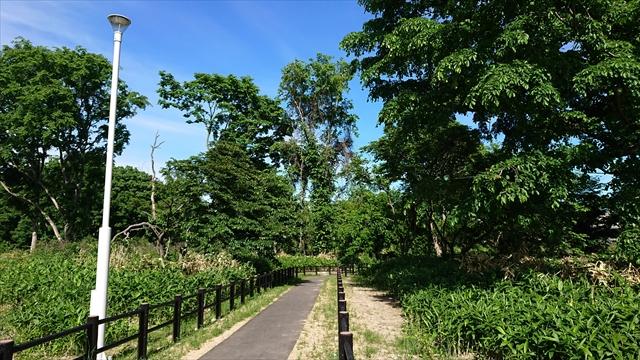 自然林保存ゾーン
