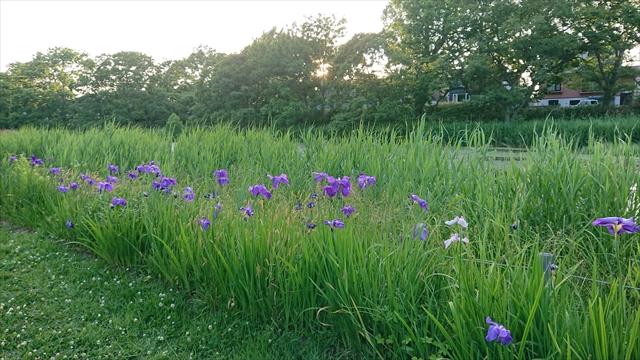 泉の沼公園内の花々