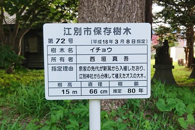 江別市保存樹木 第72号イチョウ