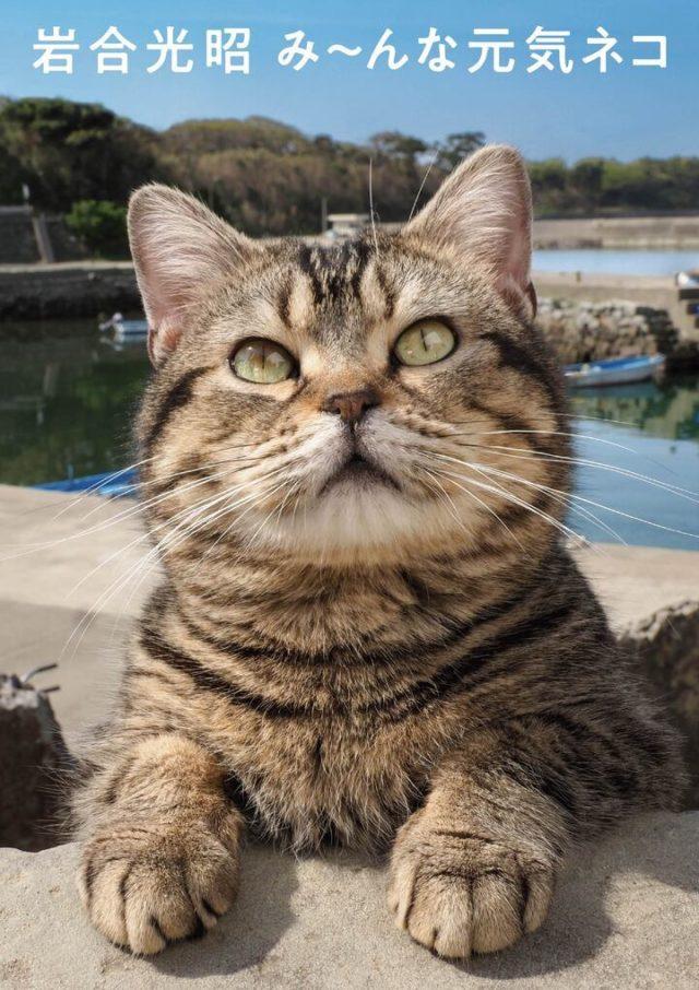 岩合光昭 みーんな元気猫