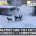 野幌駅にエゾシカの群れ出没